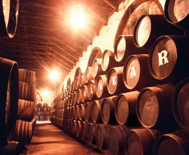 Group excursion from Seville to Cadiz and Jerez: Horses and Wineries