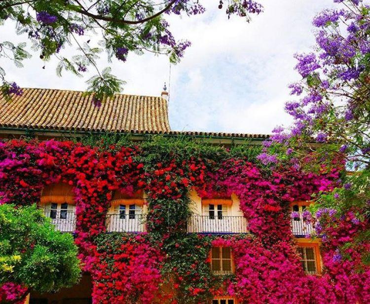 Casas Palacio Tour: Las Dueñas, Hospital de la Caridad, Casa de Salinas