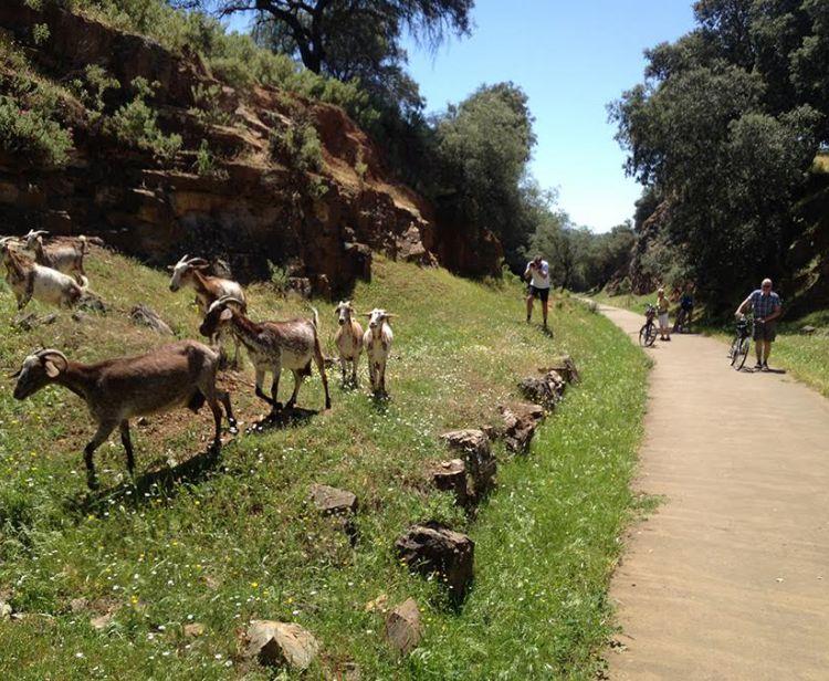 Tour en bici por los pueblos de Sevilla