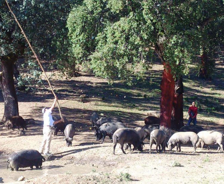 Excursión de un día de Sevilla a Aracena