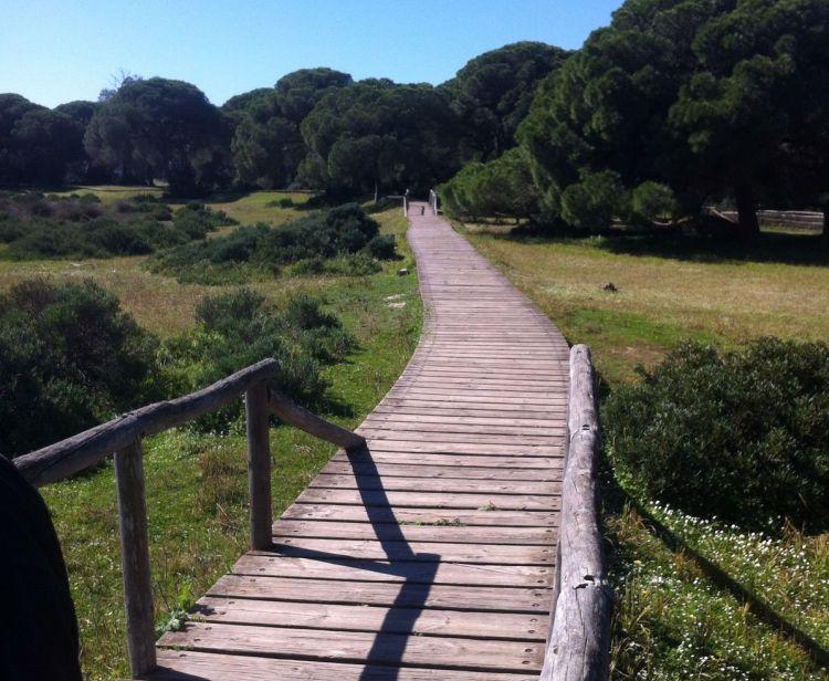 Excursión en grupo de Sevilla a Doñana y El Rocío