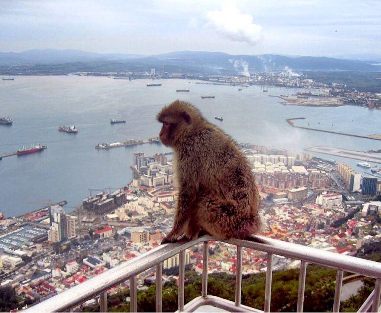Excursión en grupo de Sevilla a Gibraltar