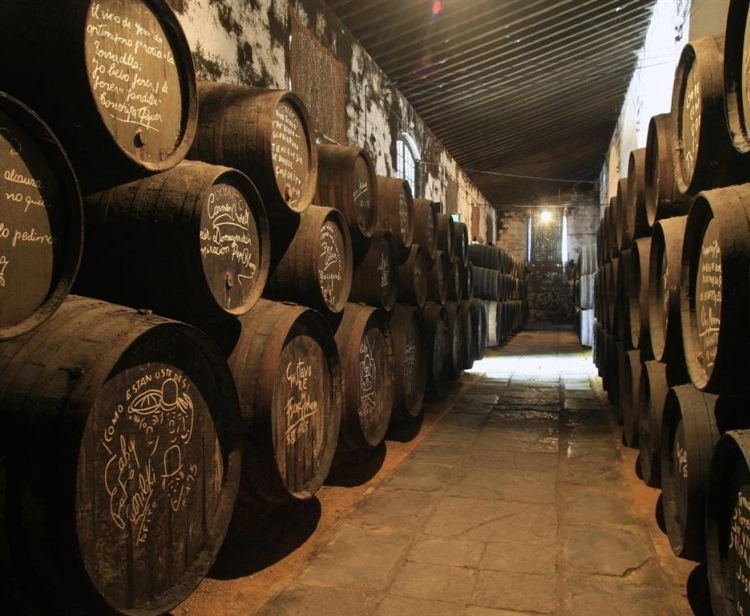 TOUR OF WINE AND TASTING IN JEREZ