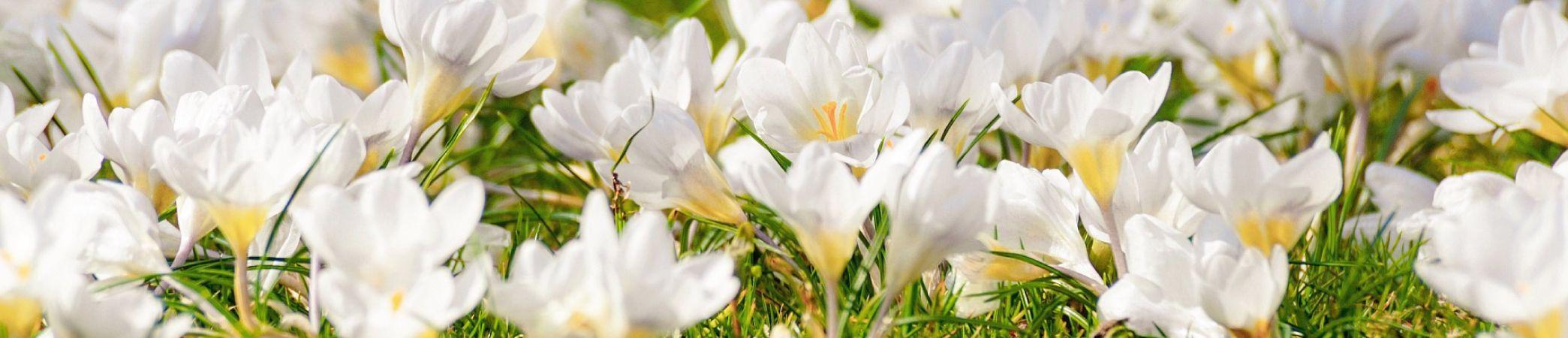 Destinos para visitar en primavera