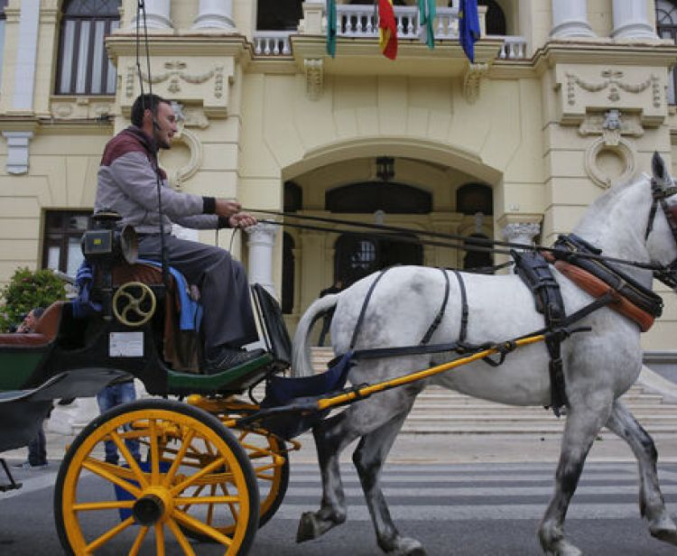 30-minute horse-drawn carriage ride