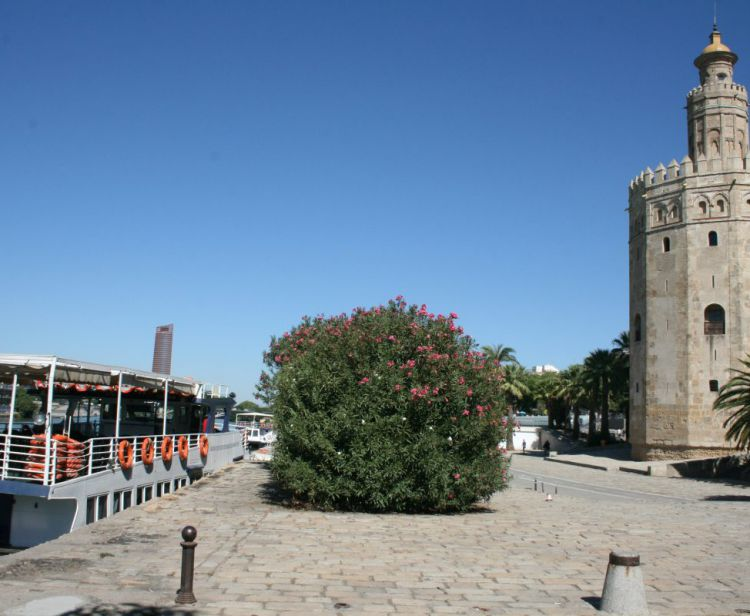 Речной круиз + СПА в Севилье
